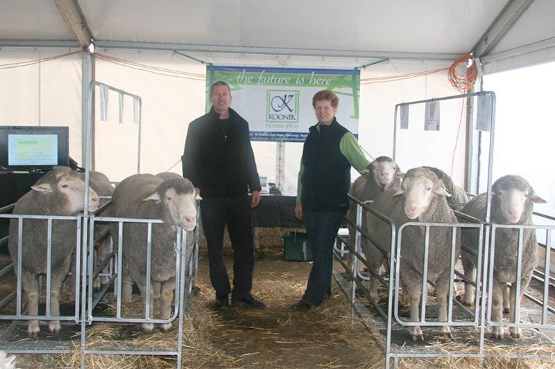 Australian-Sheep-and-Wool-Show,-Bendigo-2013