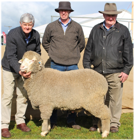 Borambil PB-189 Purchased Sheepvention 2016 for $12,000 Roger Mathews (Borambil Poll Merino Stud),  Darren Cameron, Bill Mildren (Stud Advisor)